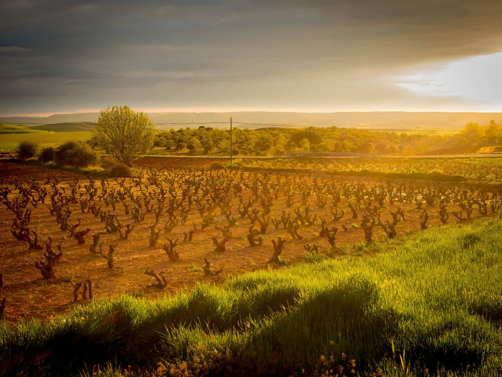 The unparalleled quality of Ribera del Duero